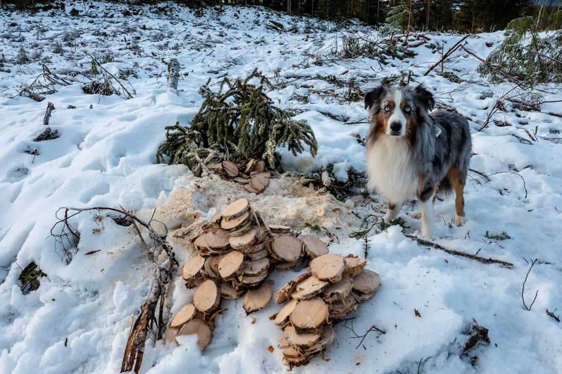 Balder i skogen