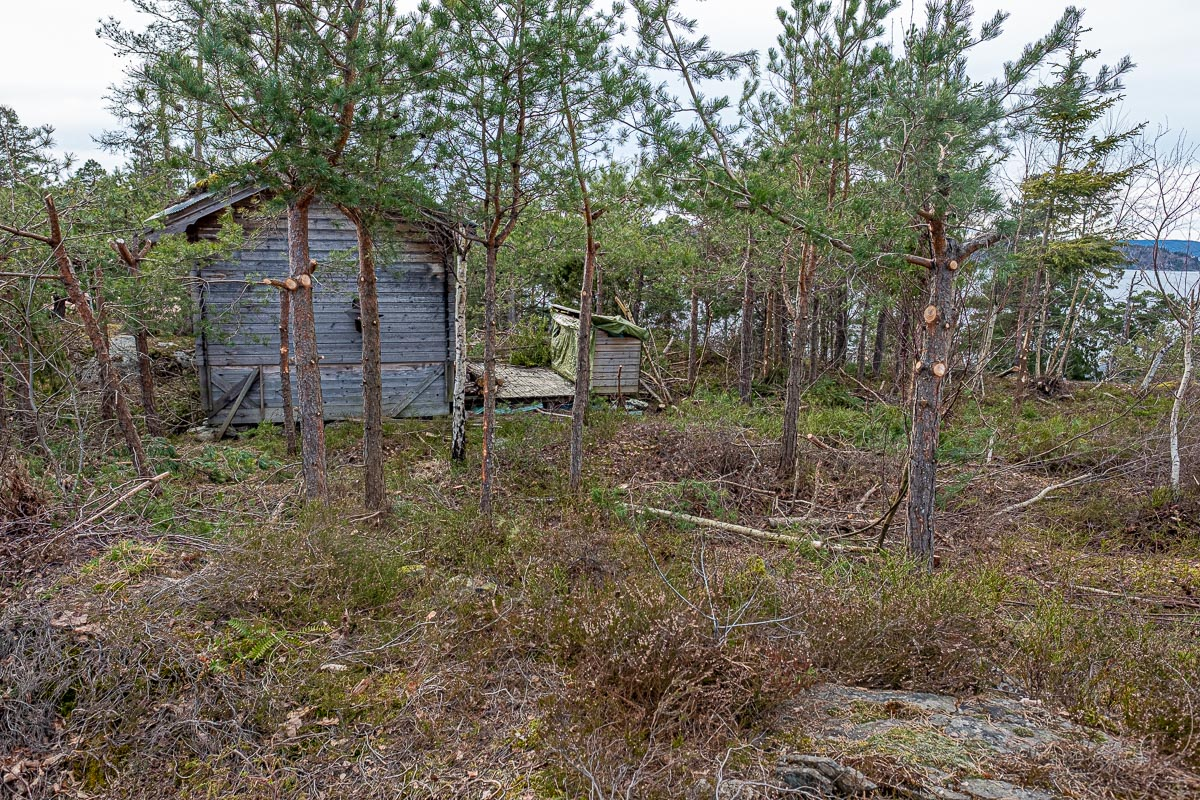 Trær og hytte