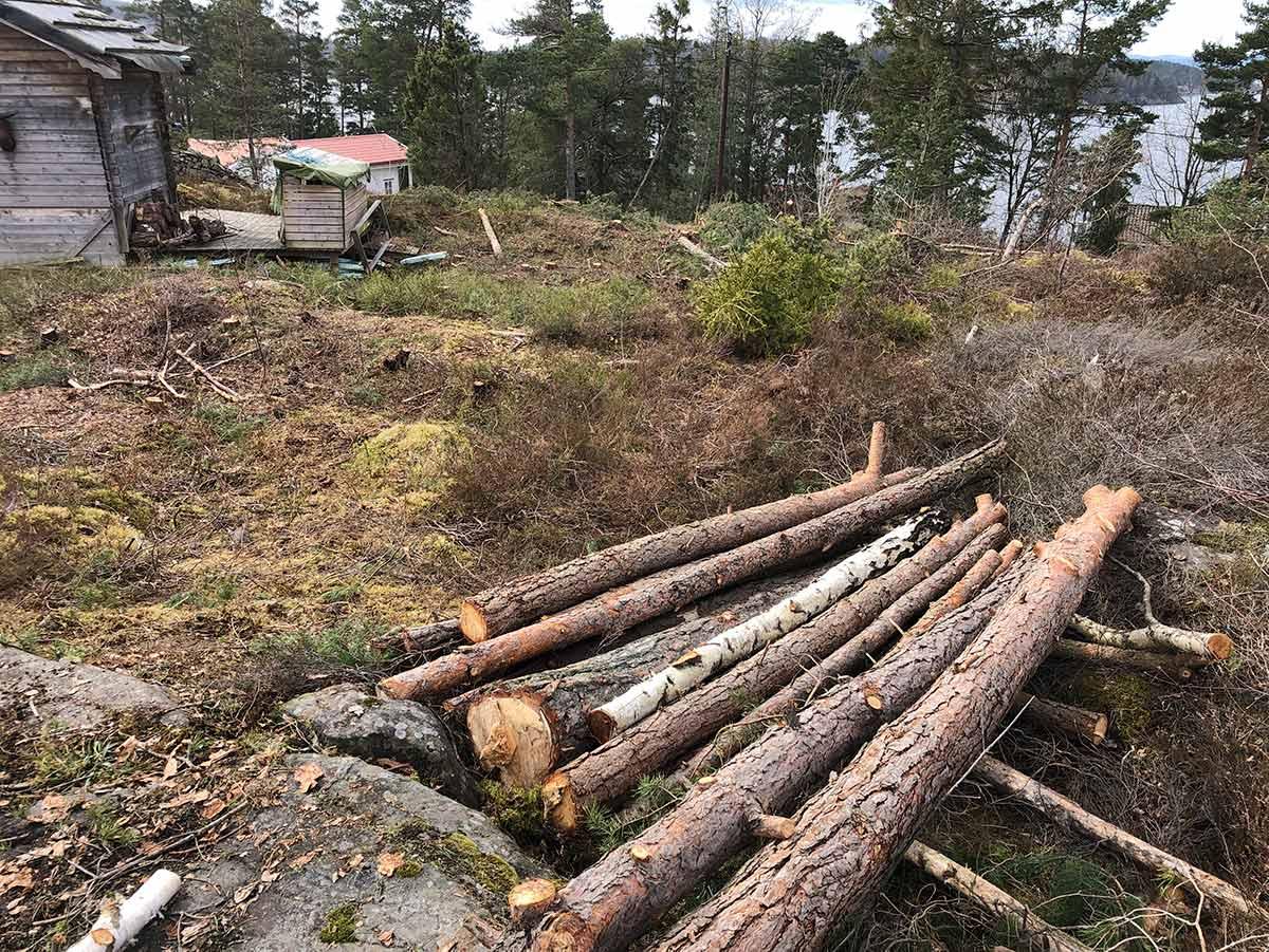 Tømmerstokker